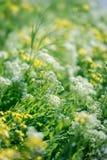 Lös ängblomma, vit blomma och gulingblommor royaltyfria foton