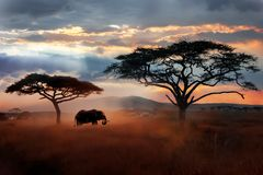 Lös afrikansk elefant i savannahen Serengeti nationalpark Djurliv av Tanzania royaltyfria foton