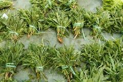 Lös arugula på en bondemarknad Royaltyfria Foton