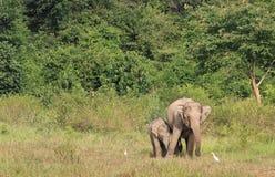 Lös asiatisk elefant i skogen Royaltyfria Foton