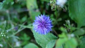 Lös blått blommar på fältet Arkivbild