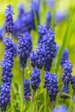 Lös blomma royaltyfria bilder