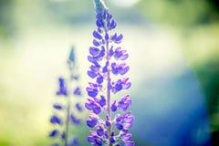 Lös blomma för sommar arkivbilder
