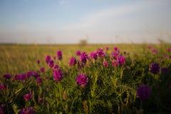 Lös blomma på äng royaltyfria foton