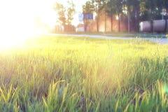 Lös blomma på en grön äng i timme för våraftonsolnedgång royaltyfria foton