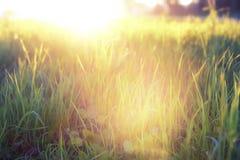 Lös blomma på en grön äng i timme för våraftonsolnedgång fotografering för bildbyråer