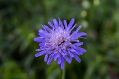 Lös blomma på fältet med suddig bakgrund fotografering för bildbyråer