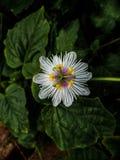 Lös blomma som finnas i skog royaltyfri foto