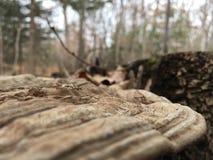 Lös champinjon på en stubbe, närbild Natur av hösten fotografering för bildbyråer