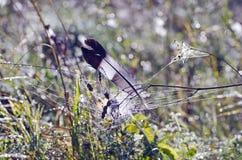 Lös duvaduvafjäder i daggigt sommargräs Arkivfoton