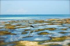 Lös fågel i blått vatten Arkivbild