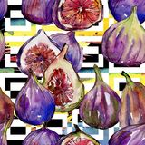 Lös frukt för exotiska fikonträd i en vattenfärgstilmodell Arkivfoton