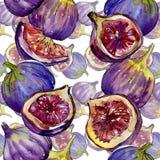 Lös frukt för exotiska violetta fikonträd i en vattenfärgstilmodell Arkivfoton