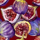 Lös frukt för exotiska violetta fikonträd i en vattenfärgstilmodell Fotografering för Bildbyråer