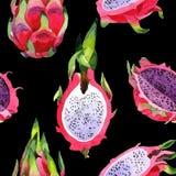 Lös fruktmodell för exotisk pitaya i en vattenfärgstil Fotografering för Bildbyråer