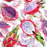 Lös fruktmodell för exotisk pitaya i en vattenfärgstil Arkivbilder
