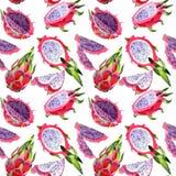Lös fruktmodell för exotisk pitaya i en vattenfärgstil Royaltyfria Foton