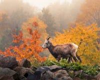 Lös get i naturen Arkivfoto