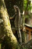 Lös grön ödla som klättrar ett träd arkivfoto