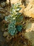 Lös grön buske i mitt - östliga berg Royaltyfri Foto