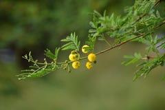 Lös gul blomma i bakgrund för abstrakt begreppgräsplannatur Royaltyfri Bild