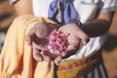 Lös Himalayan körsbär i kvinnahand Fotografering för Bildbyråer