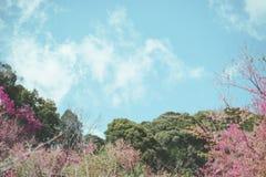 Lös Himalayan körsbärsröd blomma Arkivbilder