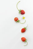 Lös jordgubbe Arkivbild