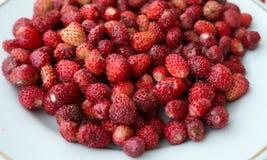 Lös jordgubbe på en platta Royaltyfri Bild