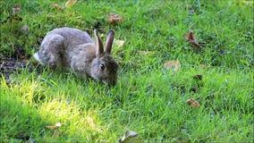 Lös kanin i en parkera som äter gräs