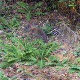 Lös kanin i vårgräs Fotografering för Bildbyråer