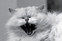 Lös katt Royaltyfri Bild