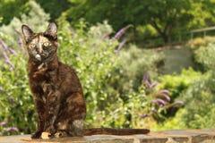 Lös katt Royaltyfri Foto