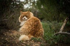 Lös katt i trän Royaltyfri Fotografi