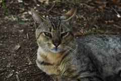 Lös katt på en gå Fotografering för Bildbyråer