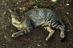 Lös katt på en gå Royaltyfri Foto