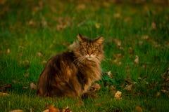 Lös katt på gräsmatta i höst Arkivfoton