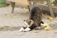 Lös katt som sträcker dess baksida på en gata med nöje Royaltyfria Bilder