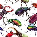 Lös krypmodell för exotiska skalbaggar i en vattenfärgstil Royaltyfria Foton