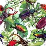 Lös krypmodell för exotiska skalbaggar i en vattenfärgstil Royaltyfria Bilder