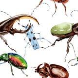 Lös krypmodell för exotiska skalbaggar i en vattenfärgstil Arkivbild