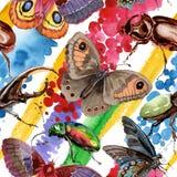 Lös krypmodell för exotiska skalbaggar i en vattenfärgstil Arkivfoton