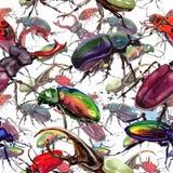 Lös krypmodell för exotiska skalbaggar i en vattenfärgstil Royaltyfri Foto