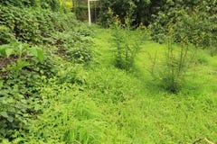 Lös lövverk av vegetationtillväxt Arkivbilder