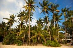 Lös lagun med palmträd Fotografering för Bildbyråer