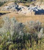 Lös ljung i grässlätt med badlandsbildande Arkivbild