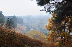 Lös natur för höst Träd i gula sidor Royaltyfria Bilder