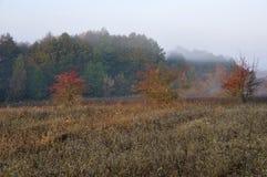 Lös natur i höst Skogar och ängar fotografering för bildbyråer