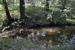 Lös natur i sommar Forest Woodland bäck fotografering för bildbyråer