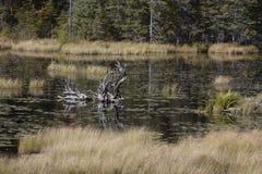 Lös natur med döda träd Royaltyfria Foton
